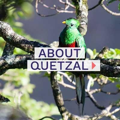 Quetzal-about-quetzal-400x400